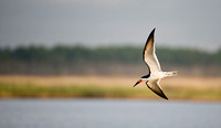 Skimmer flight_8818